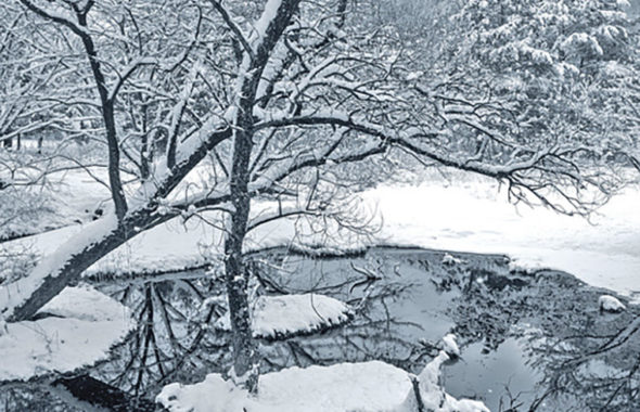 今日は大雪