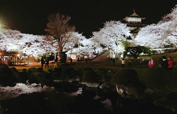 高島公園 夜桜
