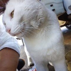 前島さんと猫