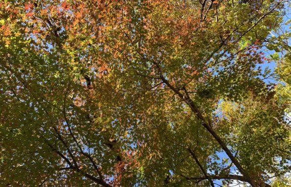 里山辺紅葉