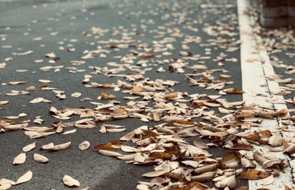 紅葉落ち葉もきれい