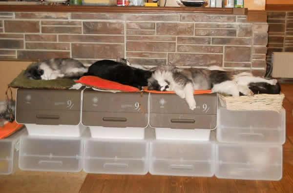 収納BOXの上で寝る猫