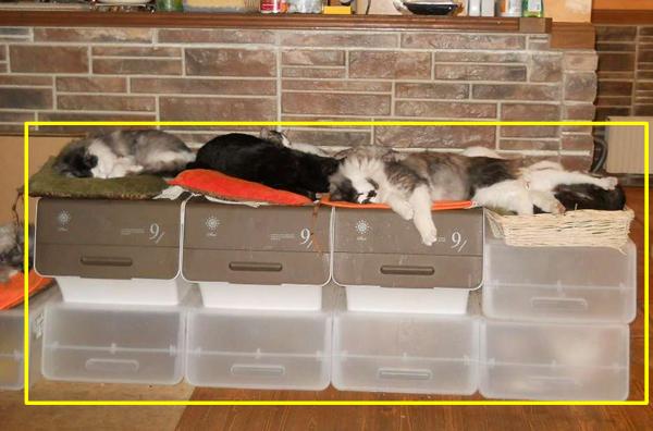 収納BOXの上で寝る猫達