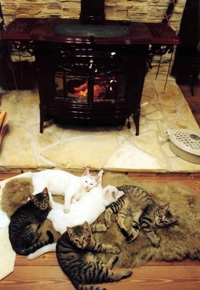 薪ストーブの前の猫達