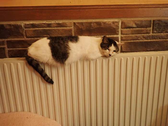 温水パネルヒーターと猫