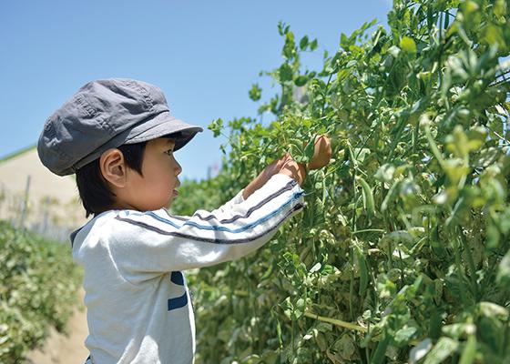 子供野菜を収穫