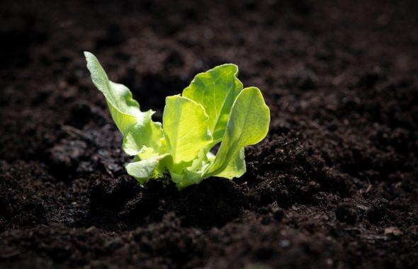 コロナ疲れ対策|新芽