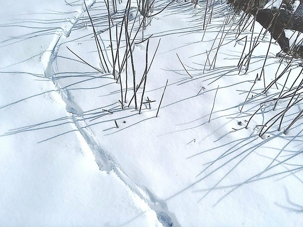 くらす 雪足跡