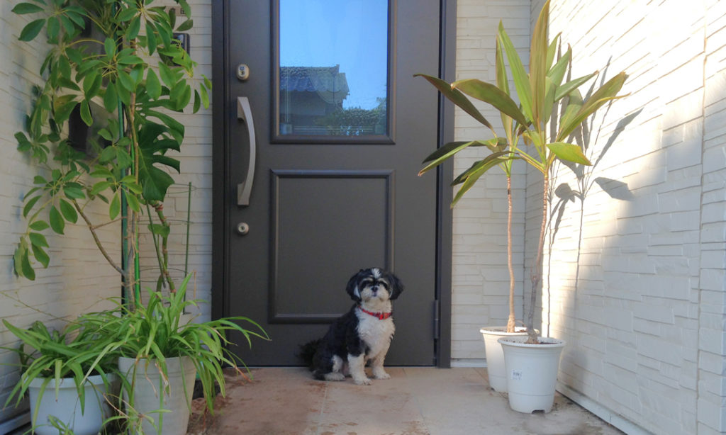 玄関の前に座る犬