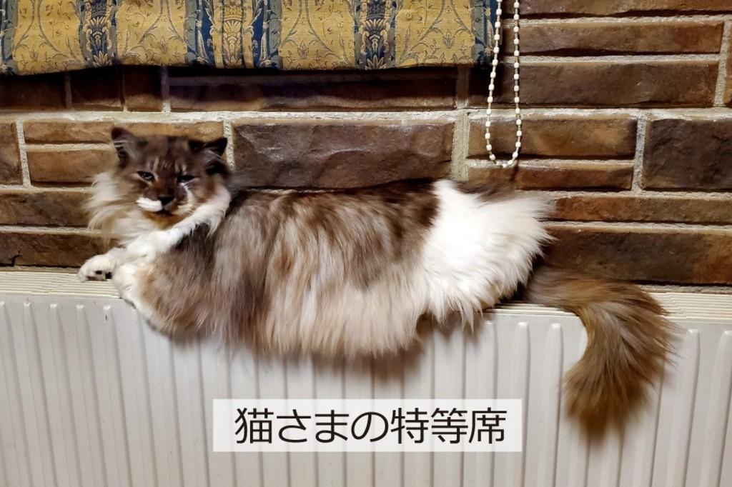 エルハウス施工事例パネルヒーターの上に猫