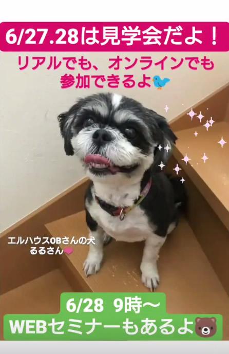 エルハウスインスタグラムストーリー犬