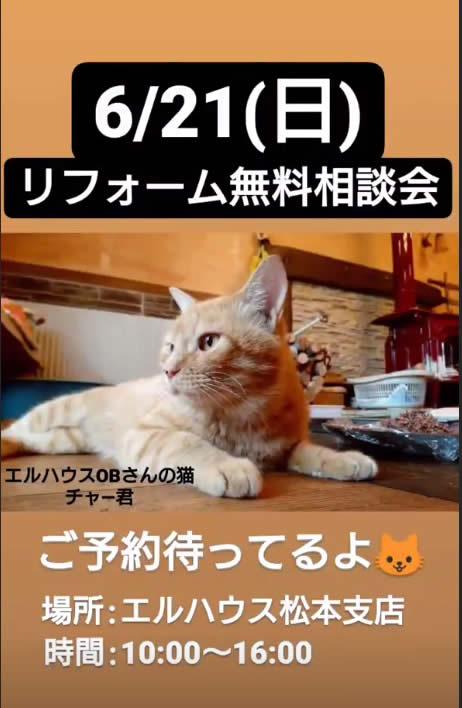 エルハウスインスタグラムストーリー猫