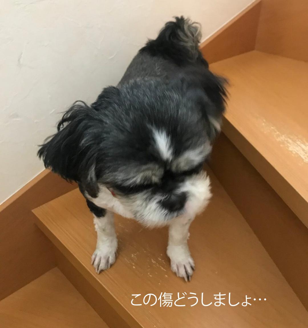 エルハウス施工事例階段と犬