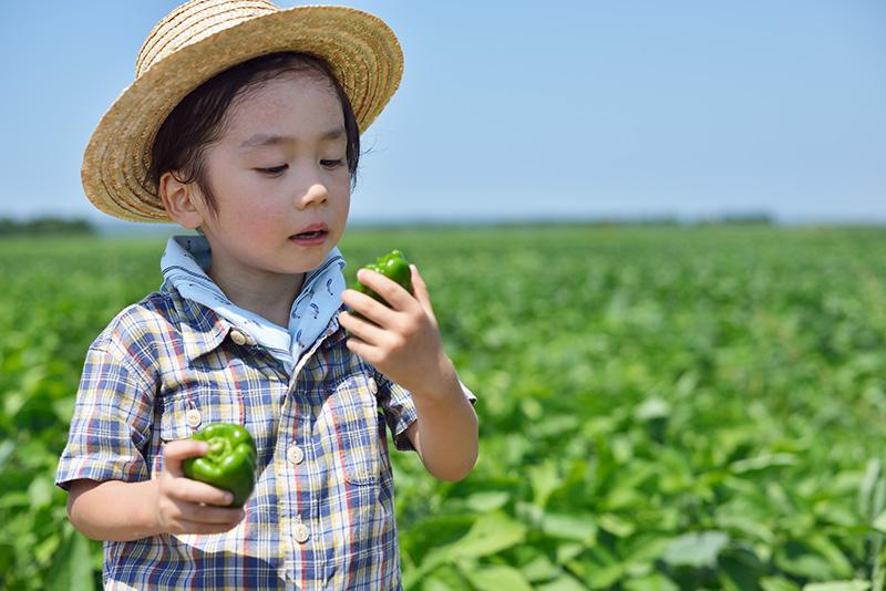 子供 畑で収穫