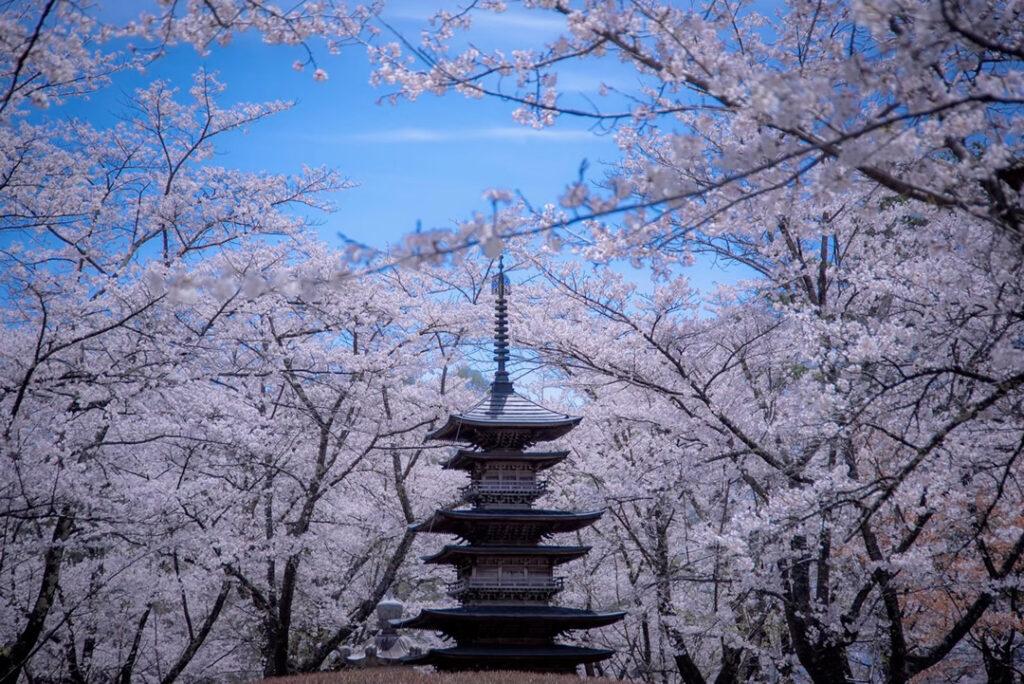 聖光寺と桜