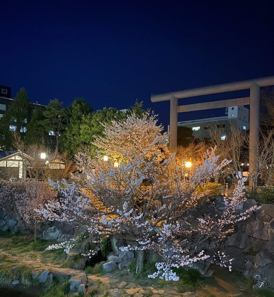 長野県四柱神社の夜桜