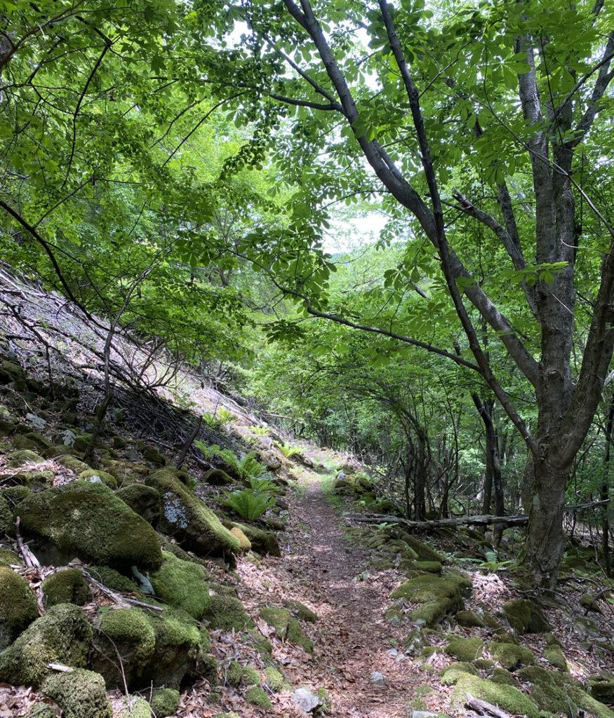 鉢伏山をめざす道